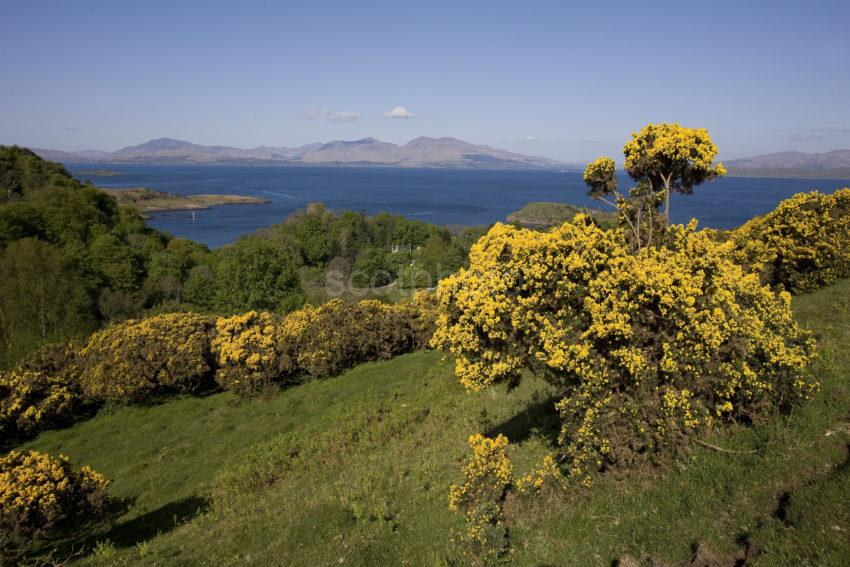 I5D2354 Spring View Towards Dunollie Castle And Island Of Mull From Oban