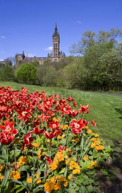 WY3Q4289 Springtime Kelvingrove Park With University Tower