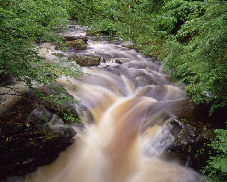 Powerful Waterfalls In The Birks Of Aberfeldy Nr Aberfeldy Perthshire