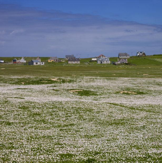 Scattered Community Nr Port Ness Butt Of Lewis Cropped
