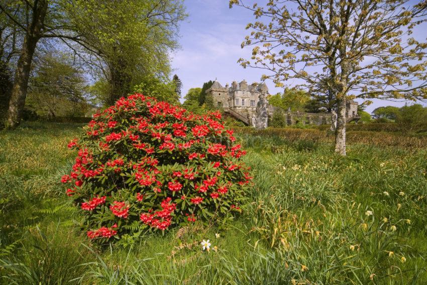 WY3Q9956 Spring At Torosay Castle Mull