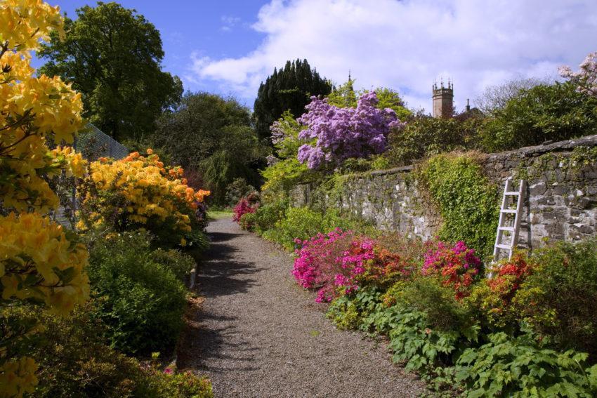 WY3Q7187 Ardmaddy Gardens Argyll