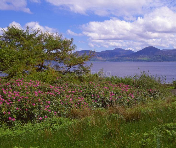 Springtime Landscape View Towards The Island Of Arran From Kintyre