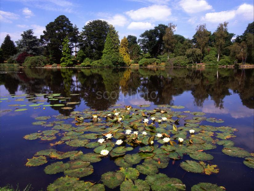Sheffield Park Gardens Sussex From Lake