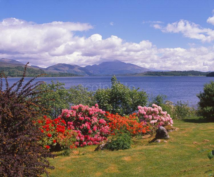 Magnificent Spring View Towards Loch Etive And Ben Cruachan From The West North Connel Argyll
