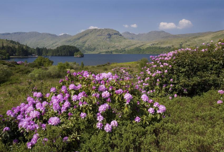 Springtime Loch Katrine
