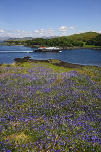 MV CLANSMAN FROM BLUEBELLS KERRERA