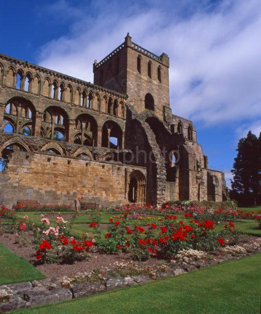 Summer View Of Jedburgh Abbey From The Gardens Jedburgh Roxburghshire