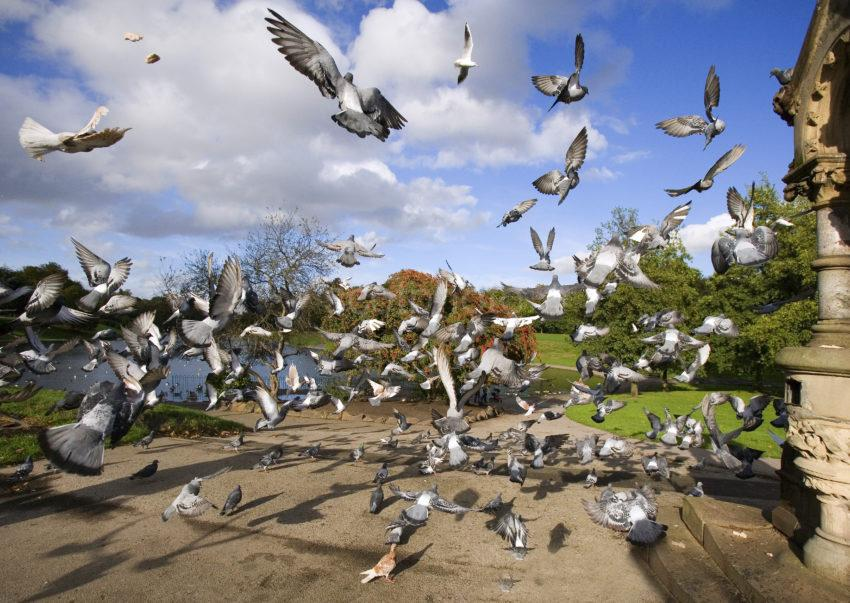 WY3Q0784 BIRDS SEFTON PARK