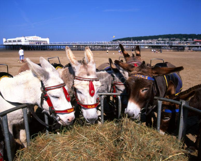 Weston Supermare Donkeys