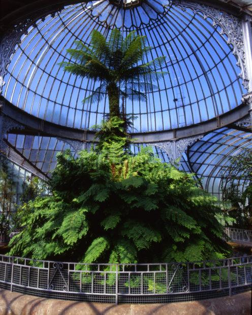 Inside The Kibble Palace At The Botanical Gardens West Side Of Glasgow