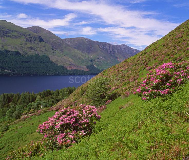 Summer View Overlooking Loch Lochy The Great Glen Highlands
