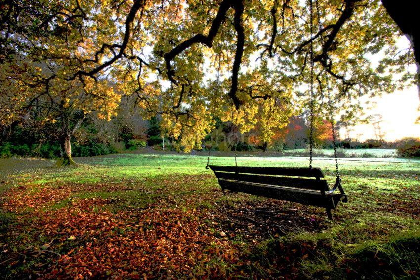 Swing Seat Under Oak