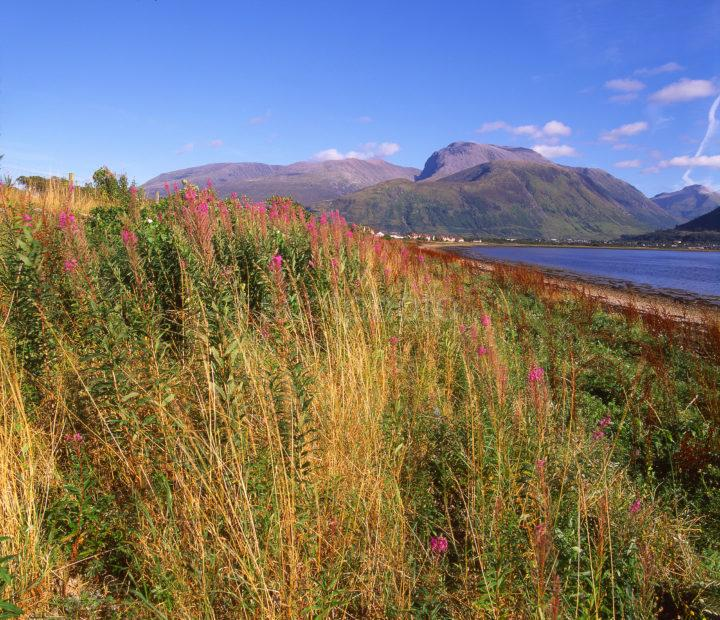 View Towards Ben Nevis And Fort William As Seen From Loch Eil Lochaber