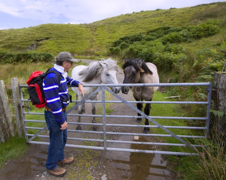 Hiker With Horses Isle Of Kerrea