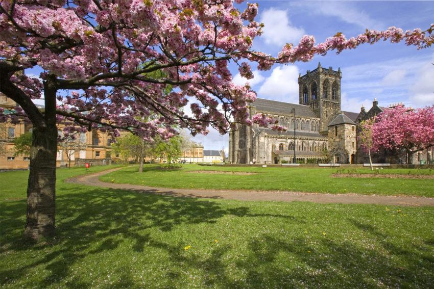 WY3Q4072 Paisley Abbey Spring Under Cherry Tree Renfrewshire Glasgow