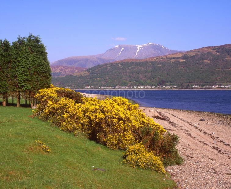 Unusual Spring View From Across Loch Eil Towards Fort William And Ben Nevis From Ardgour West Highlands