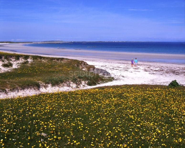 Crossapol Bay And Sands With The Machair In Flower Isle Of Tiree