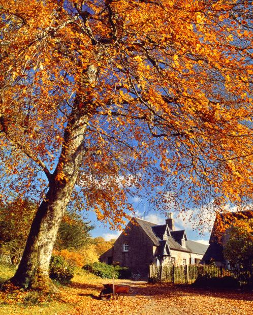 Autumn On Loch Etive Side Ardchattan Priory Cottage
