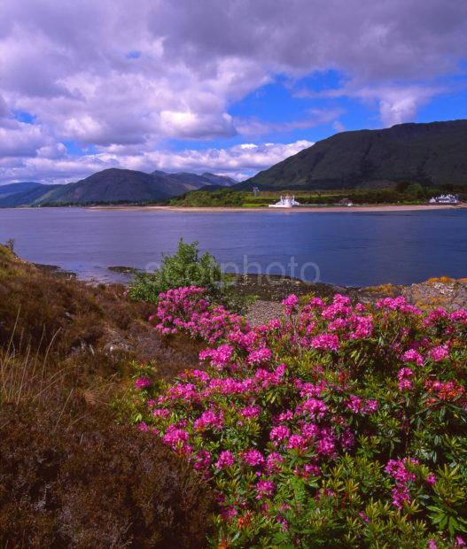 Summer View From Across The Corran Sound Towards Ardgour Corran West Highlands