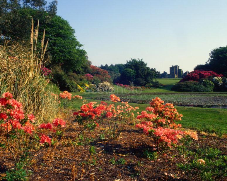 Springtime At Castle Kennedy Gardens