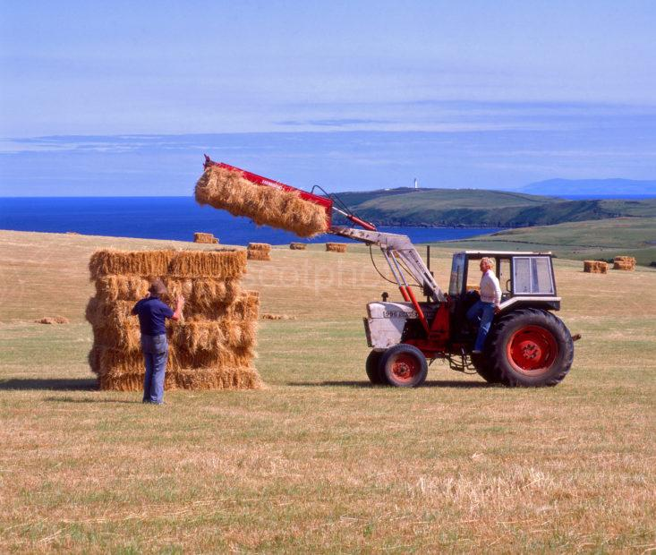 Drying The Hay On The Mull Of Galloway With Distant Lighthouse Cropped