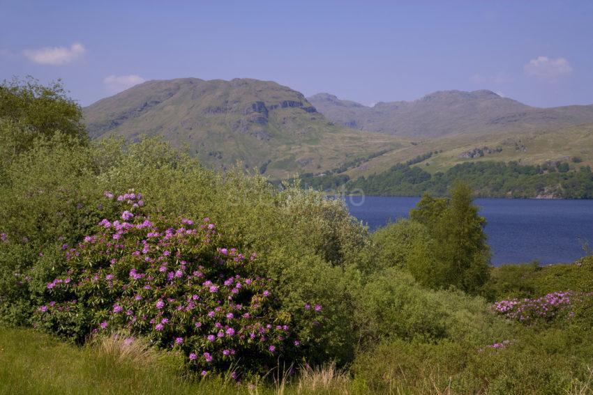 WY3Q0004 Spring On Loch Katrine Trossachs