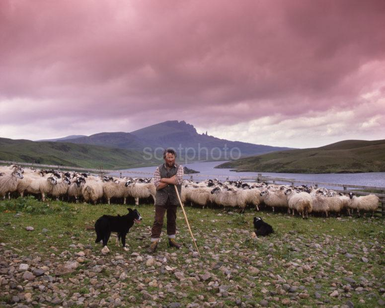 Donald MacDonald Sheep Farmer Trotternish Isle Of Skye