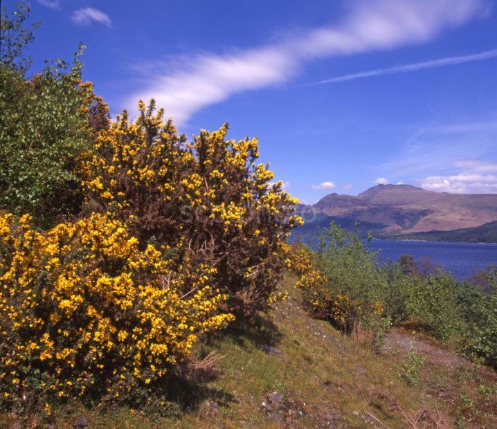 Springtime Loch Lomond