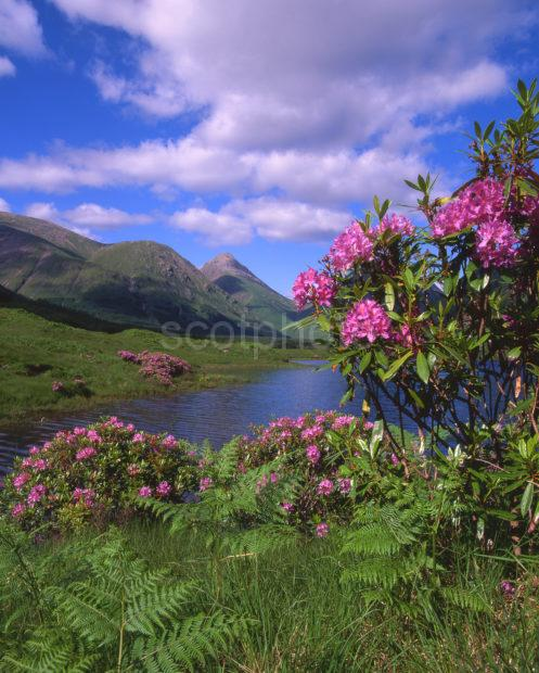 Springtime In Glen Etive From Lochan With Glencoe Hills