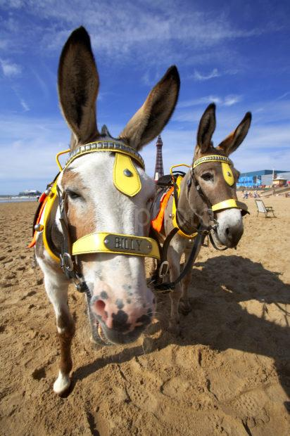 Two Donkeys Posing