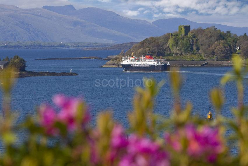 3X8G0339 Great Shot Isle Of Mull Passes Dunollie Castle With Blurred Rhodys