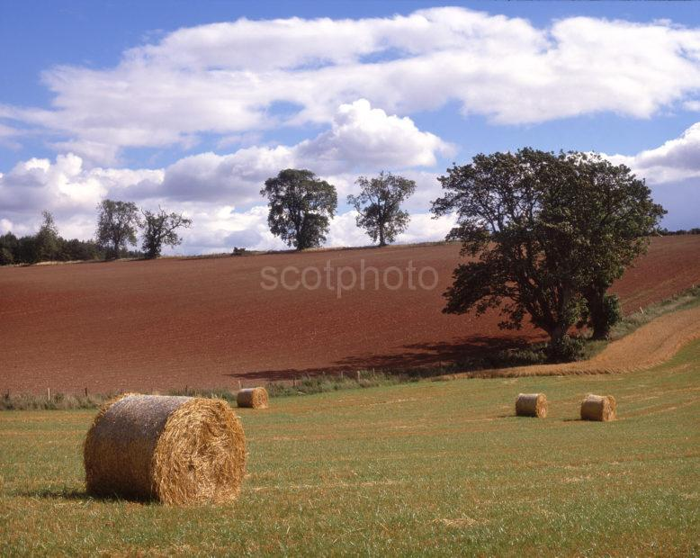 Typical Rolling Countryside In Scottish Borders