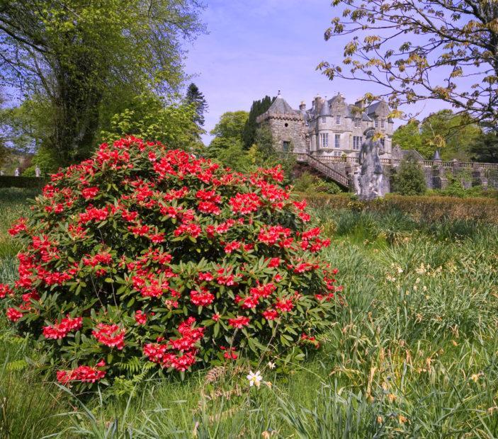 Springtime Torosay Garden And Castle Mull