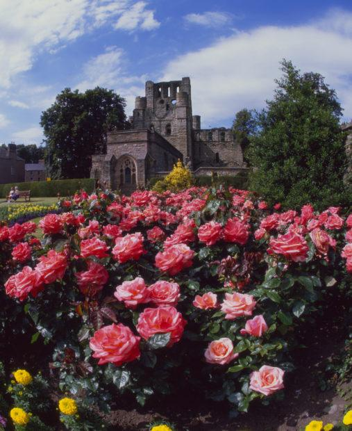 Summer Roses At Kelso Abbey Ruins Kelso Scottish Borders