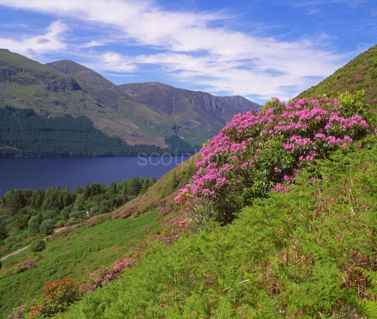 Summer View Overlooking Loch Lochy The Great Glen Highlands Landscape