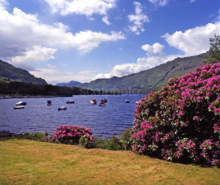 Springtime On Loch Lomond