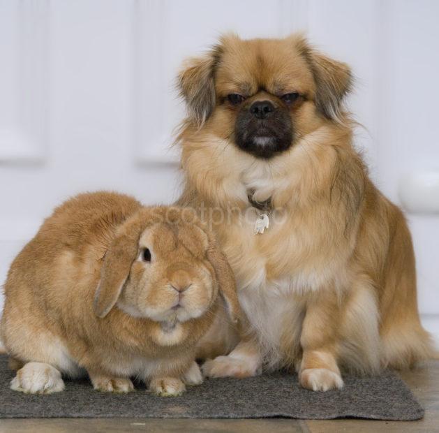 WY3Q0790 Dog And Rabbit