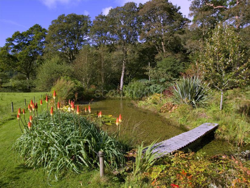 Early Autumn Nr Pond Ardmaddy