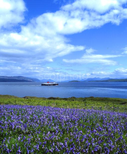 MV Isle Of Mull Passes Duart Point In Spring Island Of Mull
