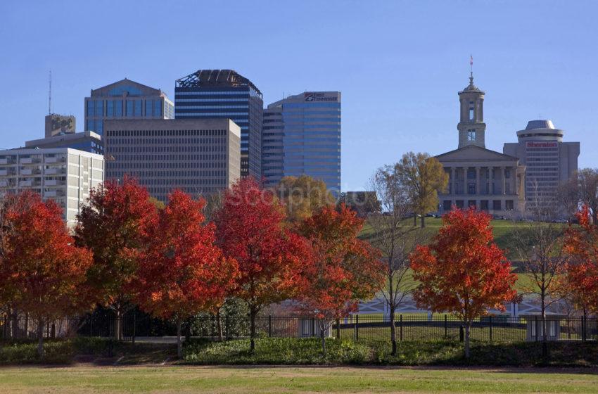 133A0480 Maple Trees Bicentennial Park2