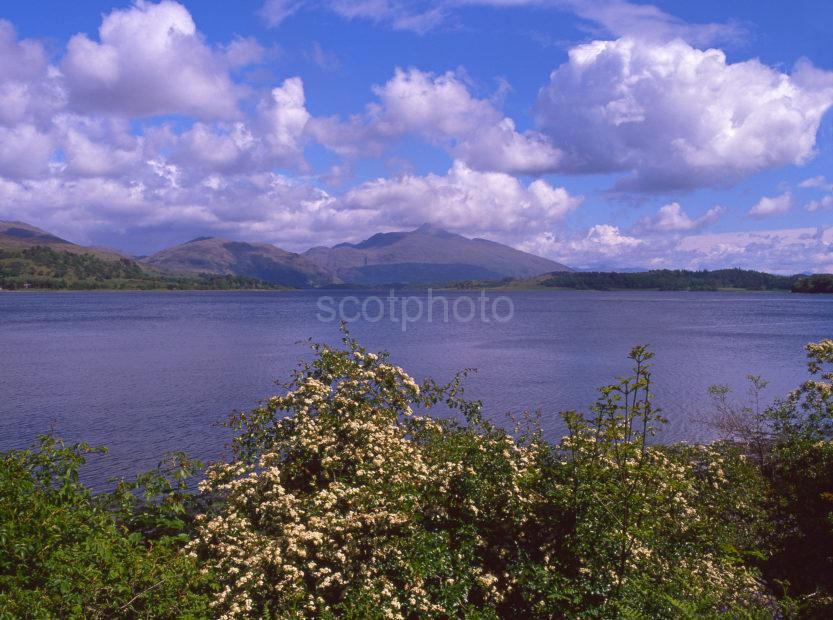 Springtime View Of Loch Etive And Ben Cruachan From The Shore At North Connel Argyll