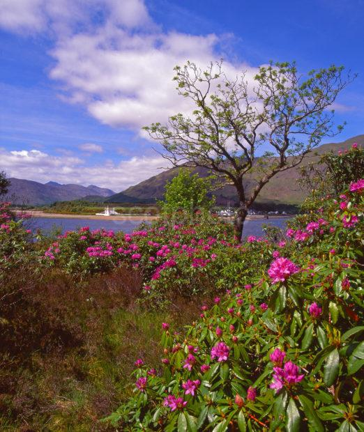 Early Summer View Towards The Ardgour Hills Seen From Across The Corran Narrows Loch Linnhe West Highlands