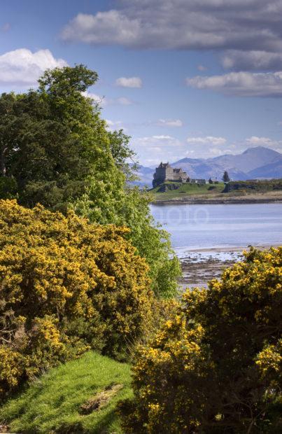 I5D4113 Portrait Of Duart Castle From Torosay Gardens MULL