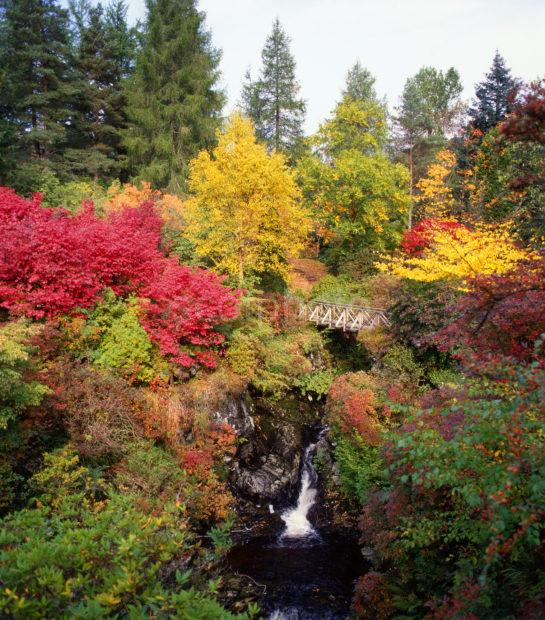 Untitled 129 Autumn Scene In Crarae Gardens Argyll
