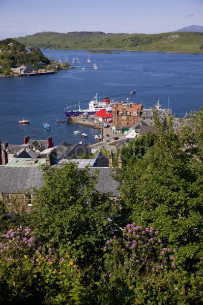 Spring View Oban Bay From Tower Portrait