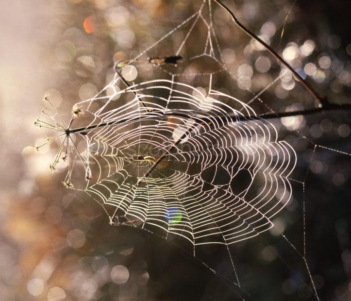 4c326d7f Cobweb