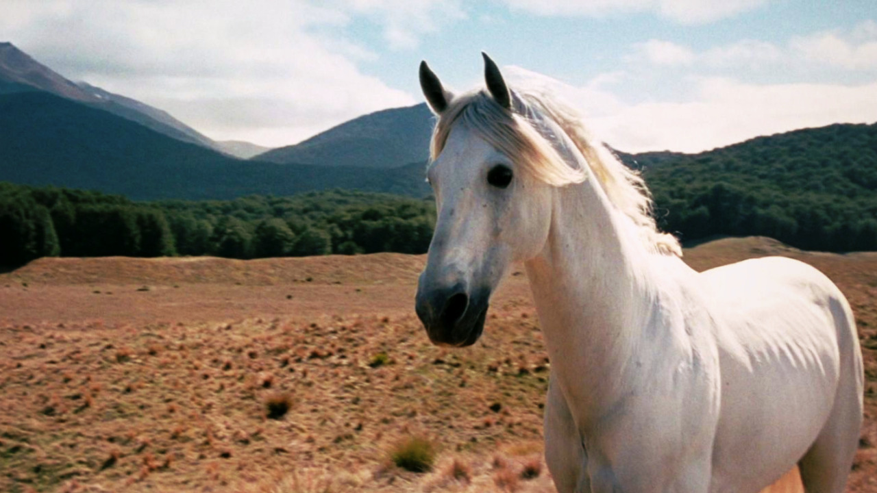 Animal Companions: Shadowfax from Lord Of The Rings.