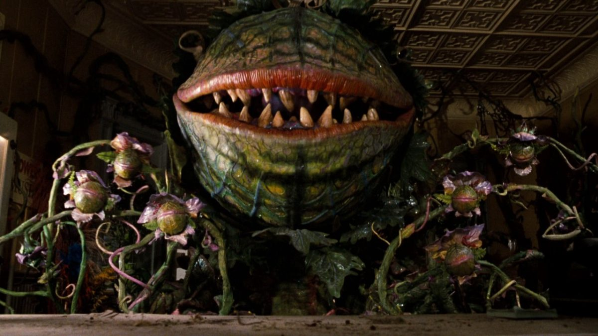 """Audry II from """"Little Shop of Horrors"""" in his large for. He takes up the entire room and looks like a venus fly trap with large red lips and thick teeth."""