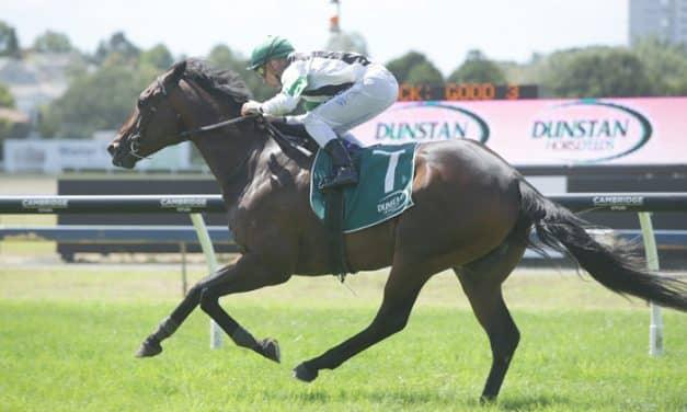 Sydney next for Ellerslie winner Ever Loyal